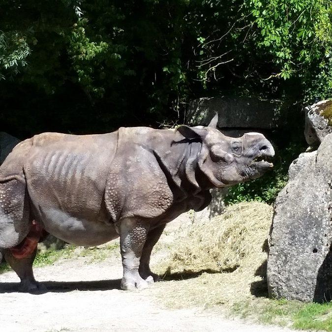 Zoo di Monaco