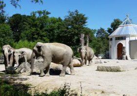 zoo-monaco-di-baviera
